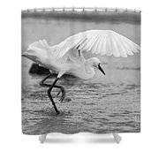 Egret Hunting In Black And White Shower Curtain