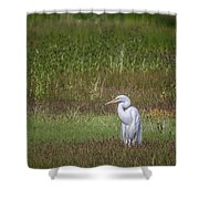 Egret In A Field, No. 1 Shower Curtain