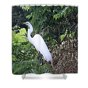 Egret In A Tree Shower Curtain