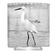 Egret In Black And White Shower Curtain