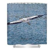 Great Blue Heron In Flight Shower Curtain