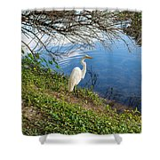 Egret In Florida Color Shower Curtain