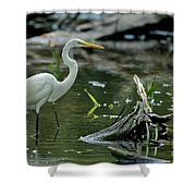 Egret In The Swamp Shower Curtain