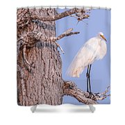 Egret In Tree Shower Curtain