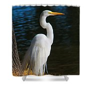 American Egret Shower Curtain