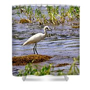 Egret On A Rock Shower Curtain