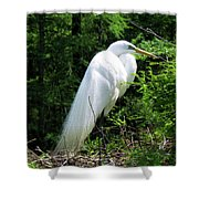 Egret On Guard Shower Curtain
