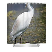 Egret Or Crane Shower Curtain