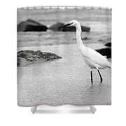 Egret Patrolling In Black And White Shower Curtain