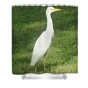 Egret Posing Shower Curtain