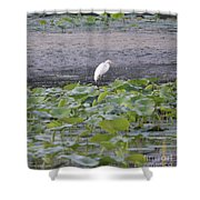 Egret Standing In Lake Shower Curtain