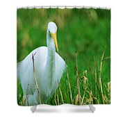 Egret Stare Down Shower Curtain