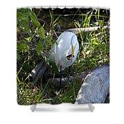 Egret With Crayfish Shower Curtain
