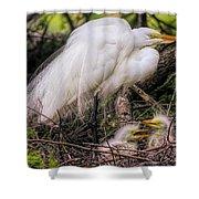 Egrets - 3362 Shower Curtain