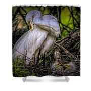 Egrets - 3399 Shower Curtain