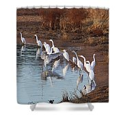 Egrets Gathering For Fishing Contest. Shower Curtain