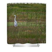 Egrets In A Field Shower Curtain