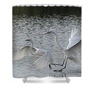 Egrets In Flight  Shower Curtain