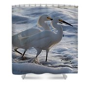 Egrets In The Shallows Shower Curtain