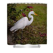 Egret's Meal Shower Curtain