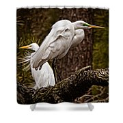 Egrets On A Branch Shower Curtain