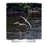 Egrets V Shower Curtain