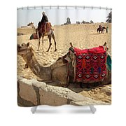 Egypt - Camel Getting Ready For The Ride Shower Curtain