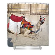 Egypt - Camel Shower Curtain