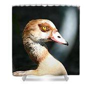 Egyptian Goose 2 Shower Curtain