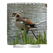Egyptian Goose Climbing Fence Shower Curtain