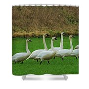Eight Beautiful Swans Shower Curtain