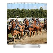 Belgian Eight Horse Hitch  Shower Curtain