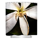 Eight Legged Goalie Shower Curtain