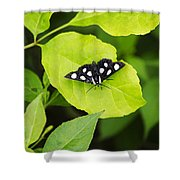 Eight Spotted Forester Shower Curtain