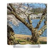 Elder Cherry Tree Shower Curtain