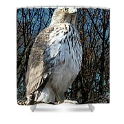 Elder Hawk Shower Curtain