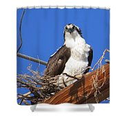 Electric Blue Osprey Shower Curtain