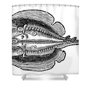 Electric Ray Shower Curtain