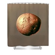 Electrum Nugget, C1100 B.c Shower Curtain
