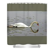 Elegant And Too Cute Shower Curtain