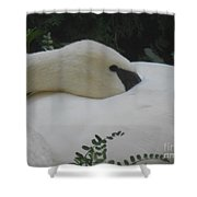 Elegant Beauty Shower Curtain