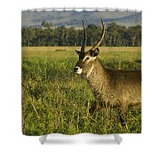 Elegant Guy Shower Curtain