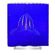 Elegant Jellies Shower Curtain
