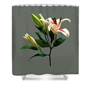 Elegant Lily And Buds Shower Curtain
