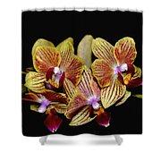 Elegant Orchid On Black Shower Curtain