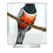 Elegant Trogon Shower Curtain