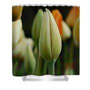 Elegant Tulip Shower Curtain