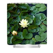 Elegant Water Lily Shower Curtain
