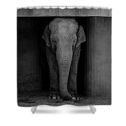Elephant #2 Shower Curtain
