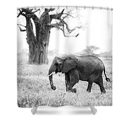 Elephant And Baobab Shower Curtain